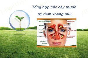 bài thuốc đông y chữa viêm xoang mũi